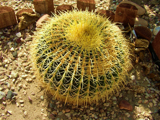 Around the world with a cactus...