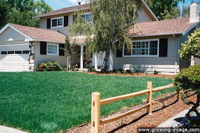 Marin-County-sod-lawn-landscaping