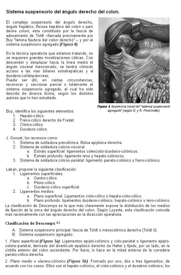 Trabajos de Investigación: ANATOMIA QUIRÚRGICA DEL EPIPLÓN MAYOR ...