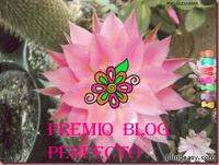 Blog Perfeito? Ai que tudo...