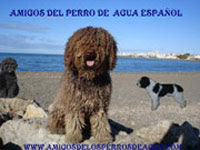 Amigos del Perro de Agua Espaol
