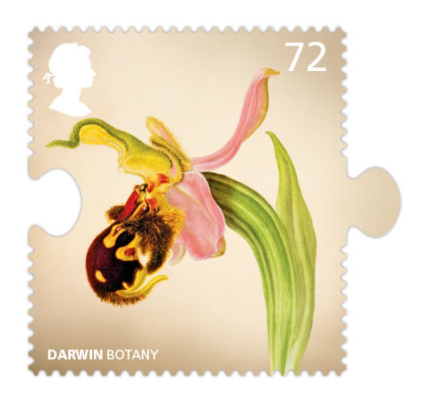 darwin orchid  stamp