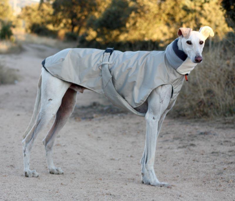 Patron abrigo para galgo