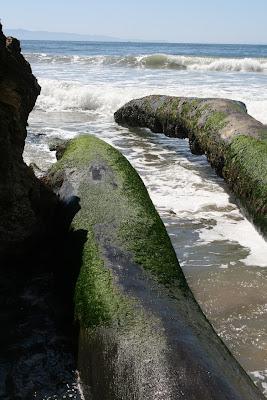 Pacific Ocean trees