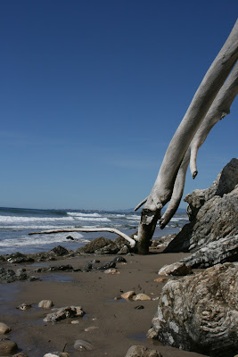 Sun-bleached beach tree