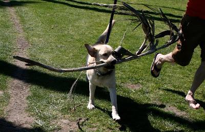 Palm branch pup