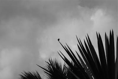 Huntington Desert Garden hummingbird