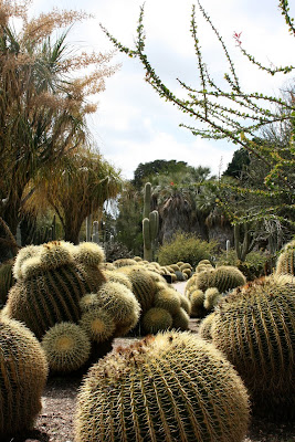 Cacti in Huntington Desert Garden