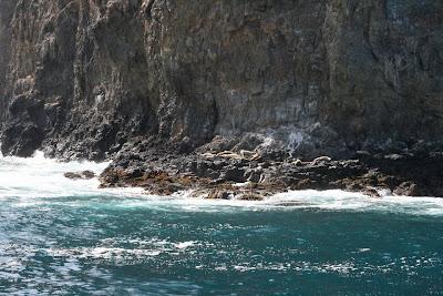 Anacapa Island sea-lions
