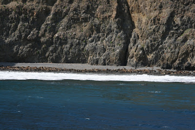 Sea lion shore Anacapa Island