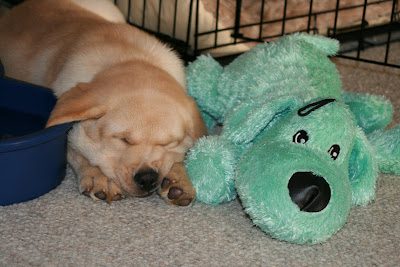 Cooper and his toy enjoying a nap