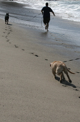 Paw prints in the sand as Cooper races up the beach after Ginger