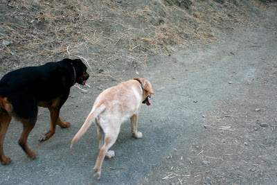 Side by side with Ginger at Runyon Canyon