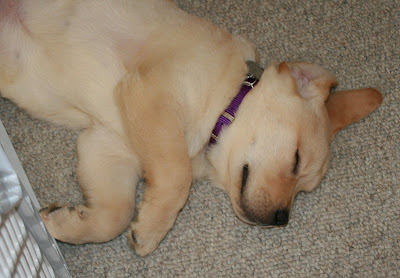 Dog tired Cooper