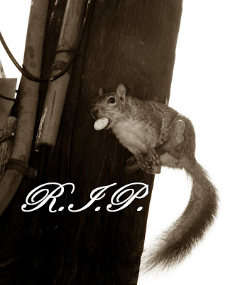 R.I.P. WEHO Squirrel