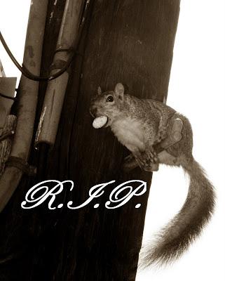 R.I.P. WEHO Squirrel