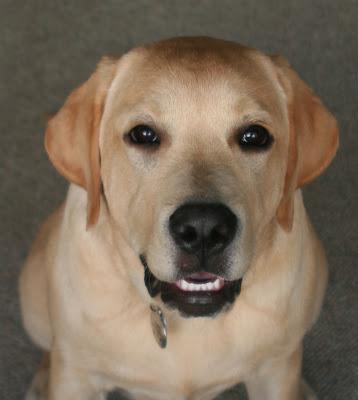 Big puppy grin