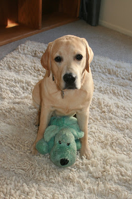 Giant cooper and Mr Fluffy, his favourite toy