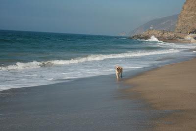 Sycamore Cove beach puppy