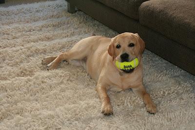 American football pup