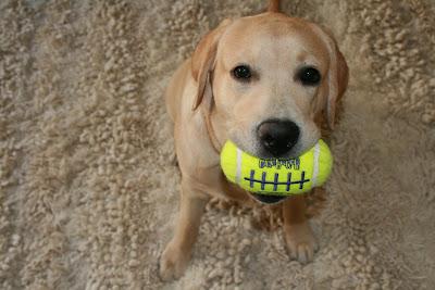 Play ball puppy