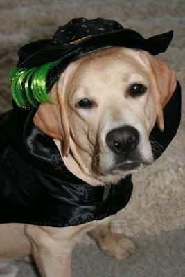 Halloween pup Cooper