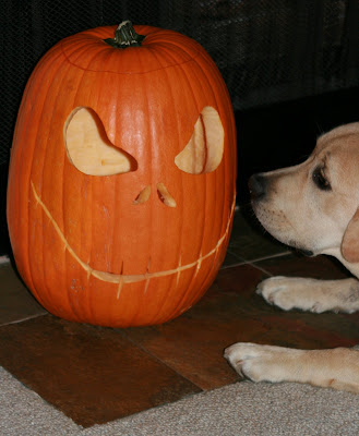 Halloween pumpkin & pup