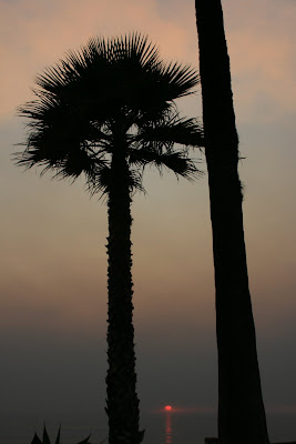 Sunset through palm trees in Santa Monica