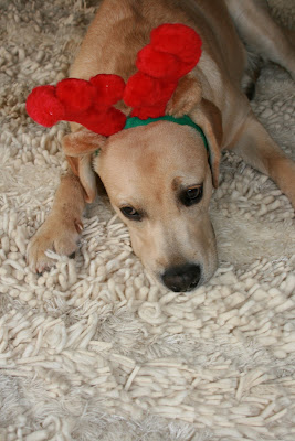 Frowning festive pup