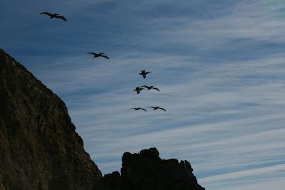 Birds over cliffs