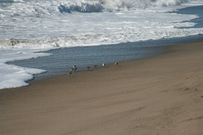 Birds wading in the sand