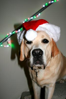 Santa Hat puppy Cooper