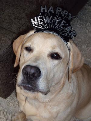 Happy New Year pup