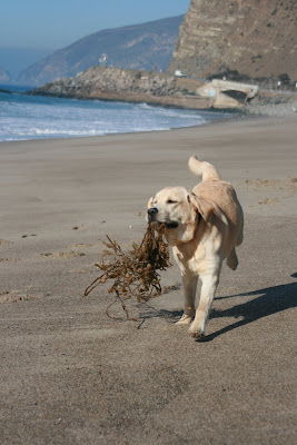 Seaweed puppy