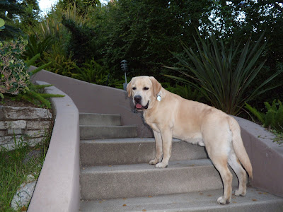 Pup on the steps
