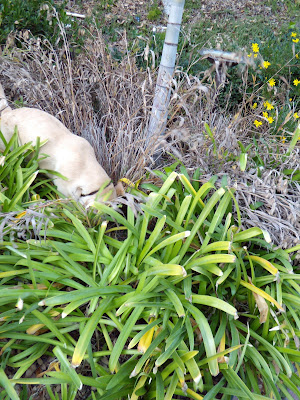 Pup in the shrubs