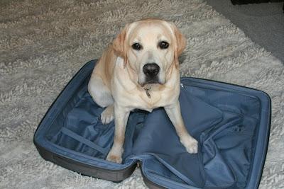 Suitcase puppy