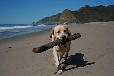 Cooper's big stick