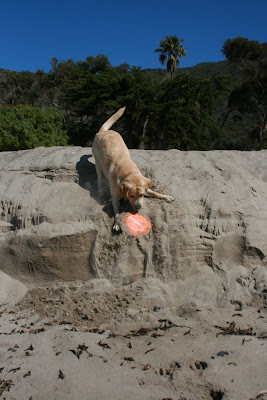 Pup having fun playing in the sand
