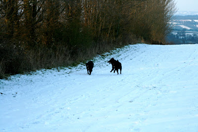 Harry and Hudson frolicking in the snow