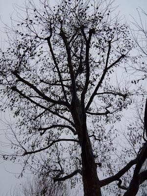 Tree by foggy River Thames