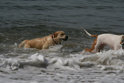 Cooper emerging from the Pacific Ocean