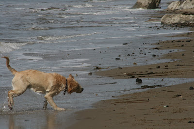 Pup shaking off the water on the beach