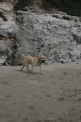 Pup's ball fun at Arroyo Burro Beach