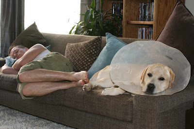 Cone head Cooper sleeping beside his dad