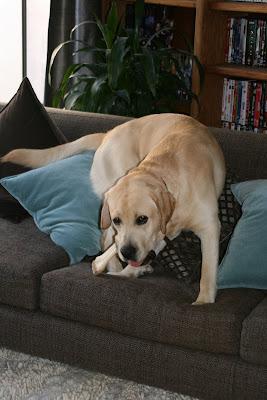 Mischievous pup Cooper