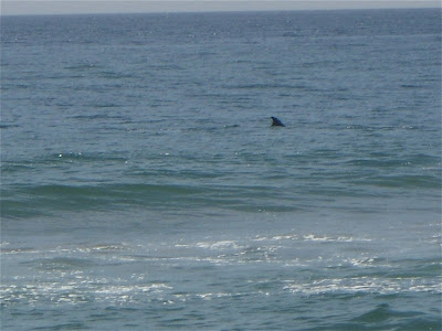 Dolphin sighting at Zuma Beach,Malibu