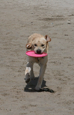 Arroyo Burro dog beach frisbee fun