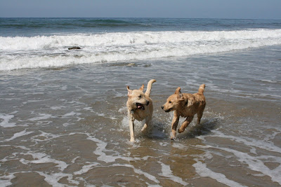 Arroyo Burro Dog beach puppy pals