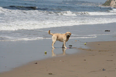 Ball fun at Arroyo Burro Dog beach
